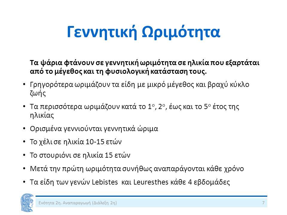 Σημείωμα Χρήσης Έργων Τρίτων 3/9 Εικόνα 18.Cepola macrophthalma Picture by Cruscanti, M.