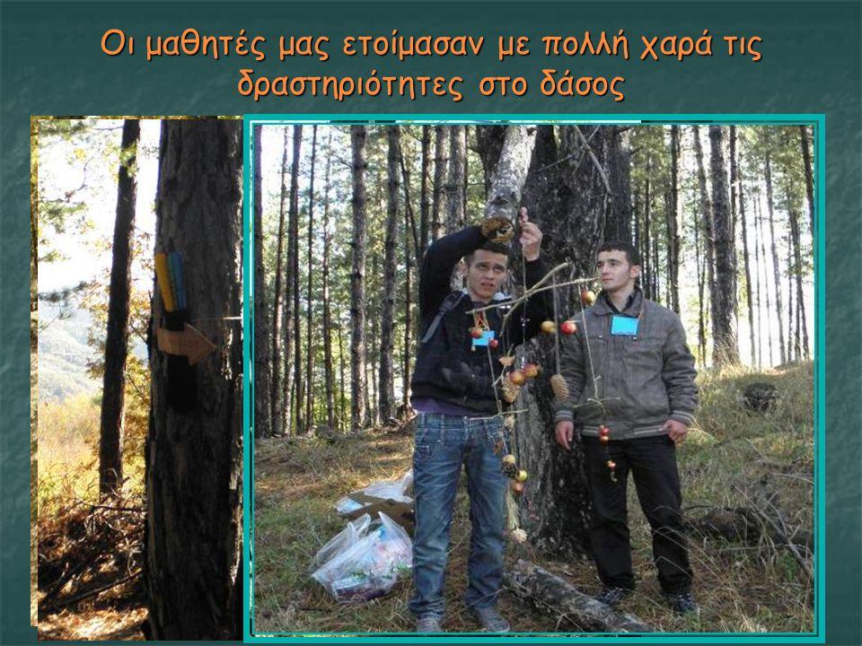 Οι μαθητές μας ετοίμασαν με πολλή χαρά τις δραστηριότητες στο δάσος