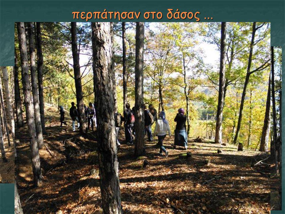 περπάτησαν στο δάσος...