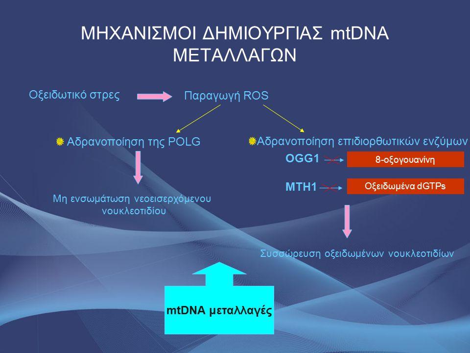 ΜΗΧΑΝΙΣΜΟΙ ΔΗΜΙΟΥΡΓΙΑΣ mtDNA ΜΕΤΑΛΛΑΓΩΝ Αδρανοποίηση της POLG Οξειδωτικό στρες Παραγωγή ROS Μη ενσωμάτωση νεοεισερχόμενου νουκλεοτιδίου Αδρανοποίηση επιδιορθωτικών ενζύμων OGG1 ΜΤΗ1 Συσσώρευση οξειδωμένων νουκλεοτιδίων mtDNA μεταλλαγές 8-οξογουανίνη Οξειδωμένα dGTPs
