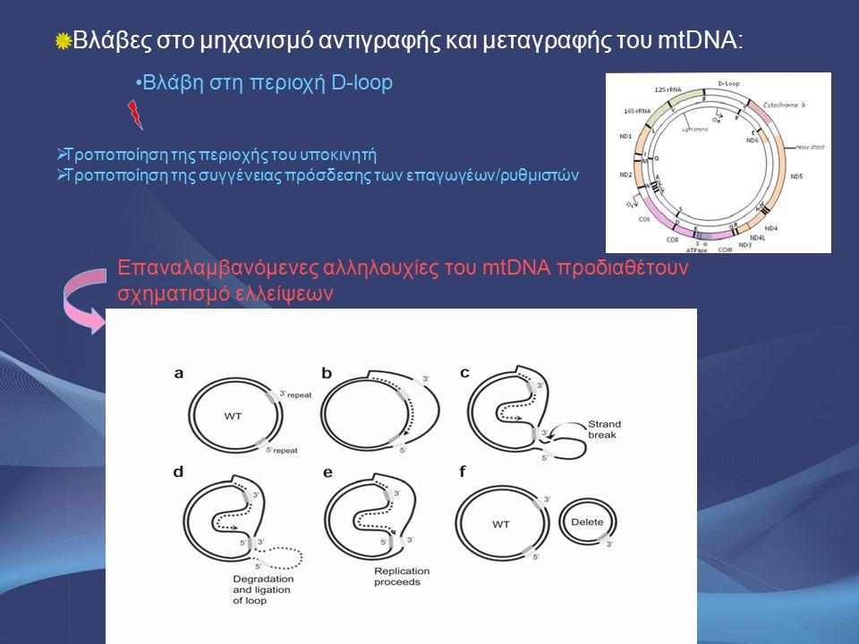 Βλάβες στο μηχανισμό αντιγραφής και μεταγραφής του mtDNA: Βλάβη στη περιοχή D-loop Επαναλαμβανόμενες αλληλουχίες του mtDNA προδιαθέτουν σχηματισμό ελλ