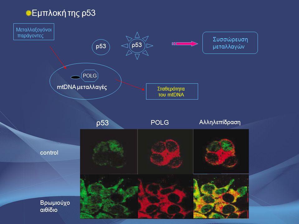 control Βρωμιούχο αιθίδιο ρ53 POLG Αλληλεπίδραση Εμπλοκή της ρ53 Μεταλλαξογόνοι παράγοντες p53 mtDNA μεταλλαγές POLG Σταθερότητα του mtDNA ρ53 Συσσώρε