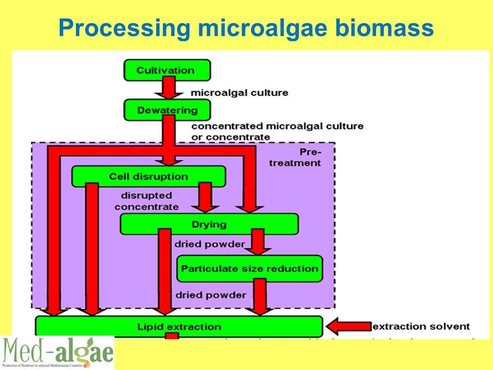 Processing microalgae biomass
