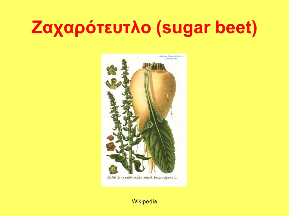 Sugar Production & Co-products (Greek Sugar Industry) Equi-Agry: efficiency and equity trade off in European agroenergy districts Foggia, June-July 2014