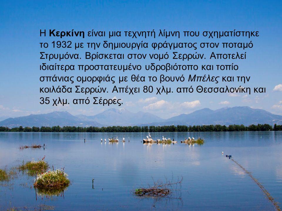 Η Κερκίνη είναι μια τεχνητή λίμνη που σχηματίστηκε το 1932 με την δημιουργία φράγματος στον ποταμό Στρυμόνα.