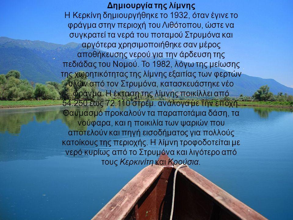 Δημιουργία της λίμνης Η Κερκίνη δημιουργήθηκε το 1932, όταν έγινε το φράγμα στην περιοχή του Λιθότοπου, ώστε να συγκρατεί τα νερά του ποταμού Στρυμόνα και αργότερα χρησιμοποιήθηκε σαν μέρος αποθήκευσης νερού για την άρδευση της πεδιάδας του Νομού.