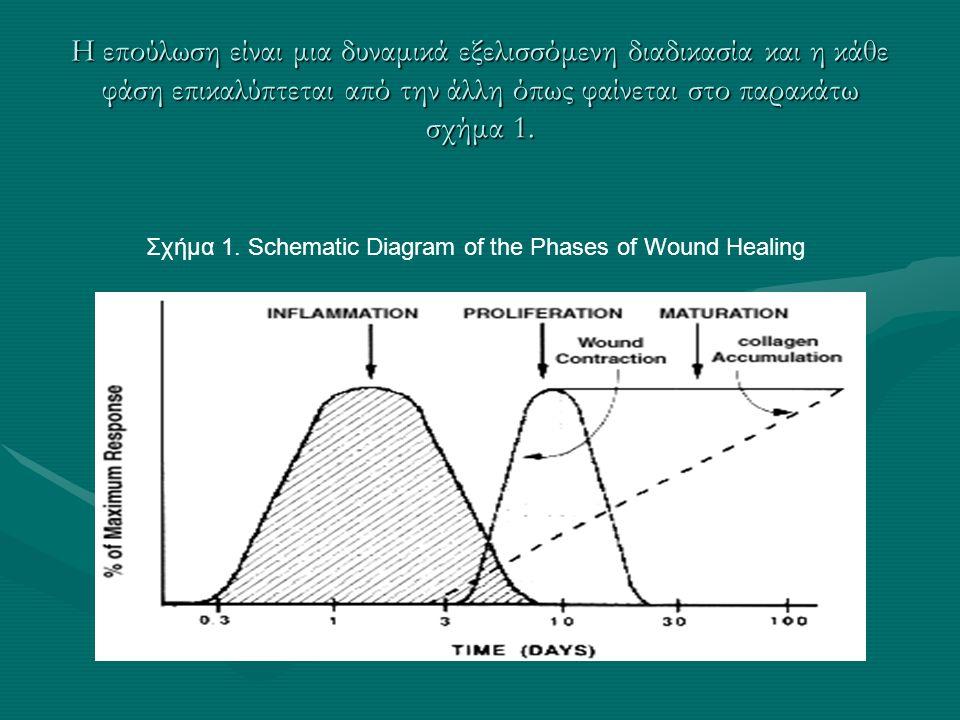 Η επούλωση είναι μια δυναμικά εξελισσόμενη διαδικασία και η κάθε φάση επικαλύπτεται από την άλλη όπως φαίνεται στο παρακάτω σχήμα 1. Σχήμα 1. Schemati