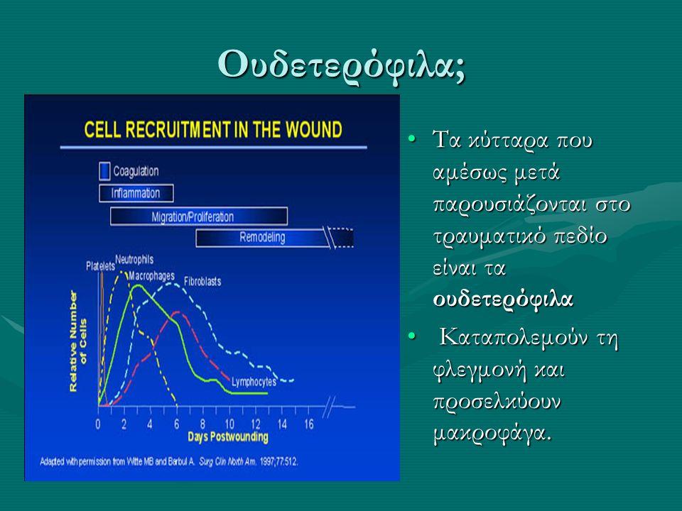 Ουδετερόφιλα; Τα κύτταρα που αμέσως μετά παρουσιάζονται στο τραυματικό πεδίο είναι τα ουδετερόφιλα Καταπολεμούν τη φλεγμονή και προσελκύουν μακροφάγα.