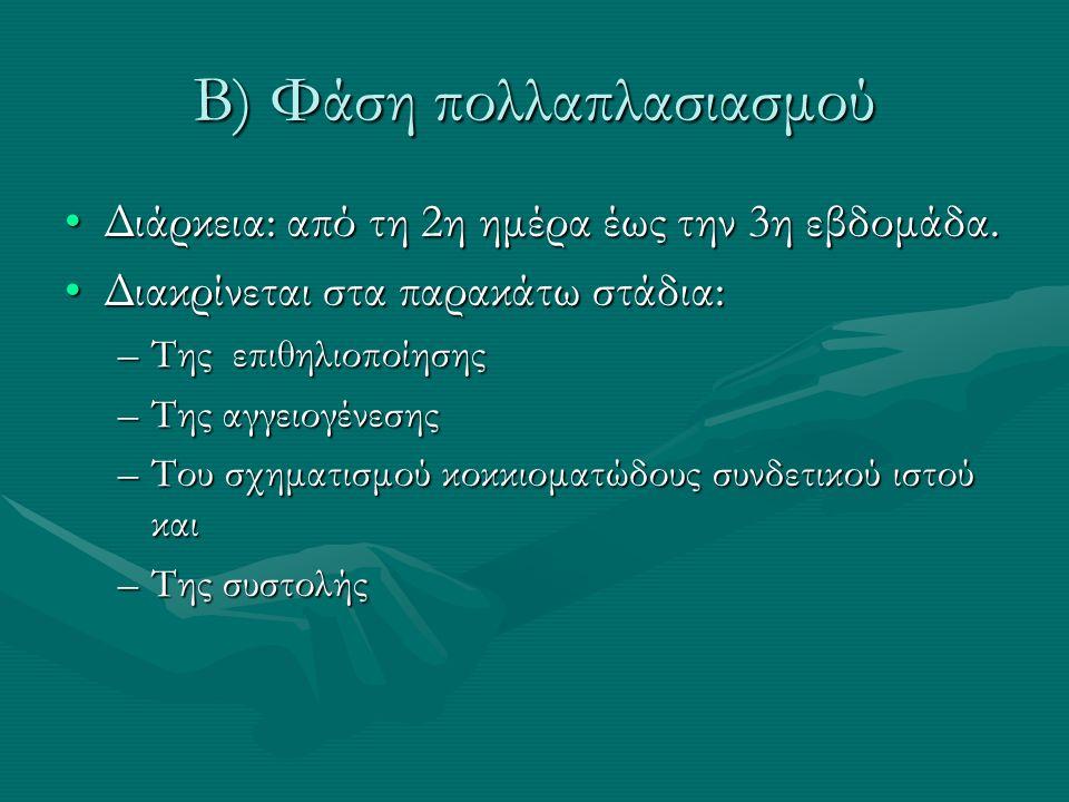Β) Φάση πολλαπλασιασμού Διάρκεια: από τη 2η ημέρα έως την 3η εβδομάδα.Διάρκεια: από τη 2η ημέρα έως την 3η εβδομάδα.
