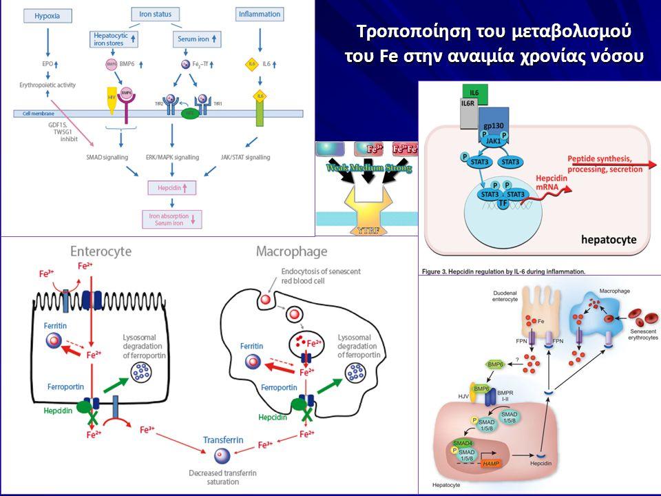 Τροποποίηση του μεταβολισμού του Fe στην αναιμία χρονίας νόσου