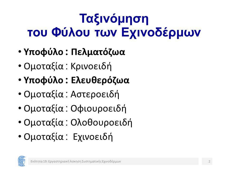 Ομοκεντροκυκλοειδή Ενότητα 19: Εργαστηριακή Άσκηση Συστηματικής Εχινοδέρμων13 3334