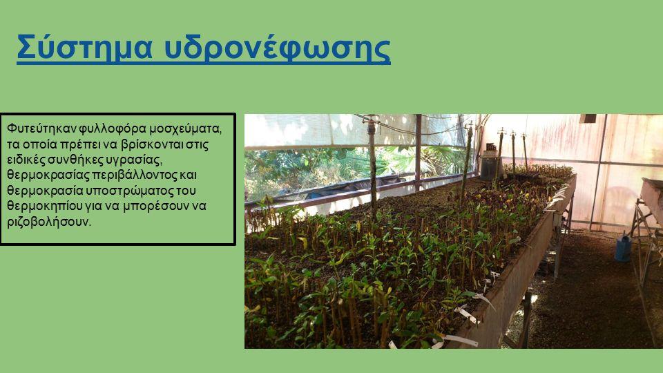 Σύστημα υδρονέφωσης Φυτεύτηκαν φυλλοφόρα μοσχεύματα, τα οποία πρέπει να βρίσκονται στις ειδικές συνθήκες υγρασίας, θερμοκρασίας περιβάλλοντος και θερμοκρασία υποστρώματος του θερμοκηπίου για να μπορέσουν να ριζοβολήσουν.