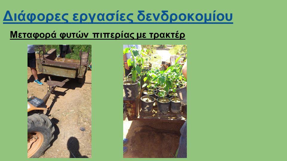 Διάφορες εργασίες δενδροκομίου Μεταφορά φυτών πιπερίας με τρακτέρ