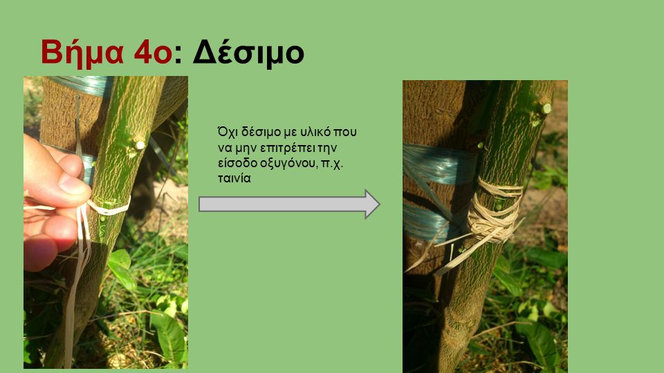 Βήμα 4ο: Δέσιμο Όχι δέσιμο με υλικό που να μην επιτρέπει την είσοδο οξυγόνου, π.χ. ταινία