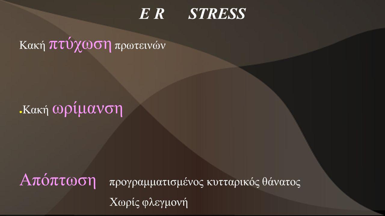 Ε R STRESS Κακή πτύχωση πρωτεινών ● Κακή ωρίμανση Απόπτωση προγραμματισμένος κυτταρικός θάνατος Χωρίς φλεγμονή