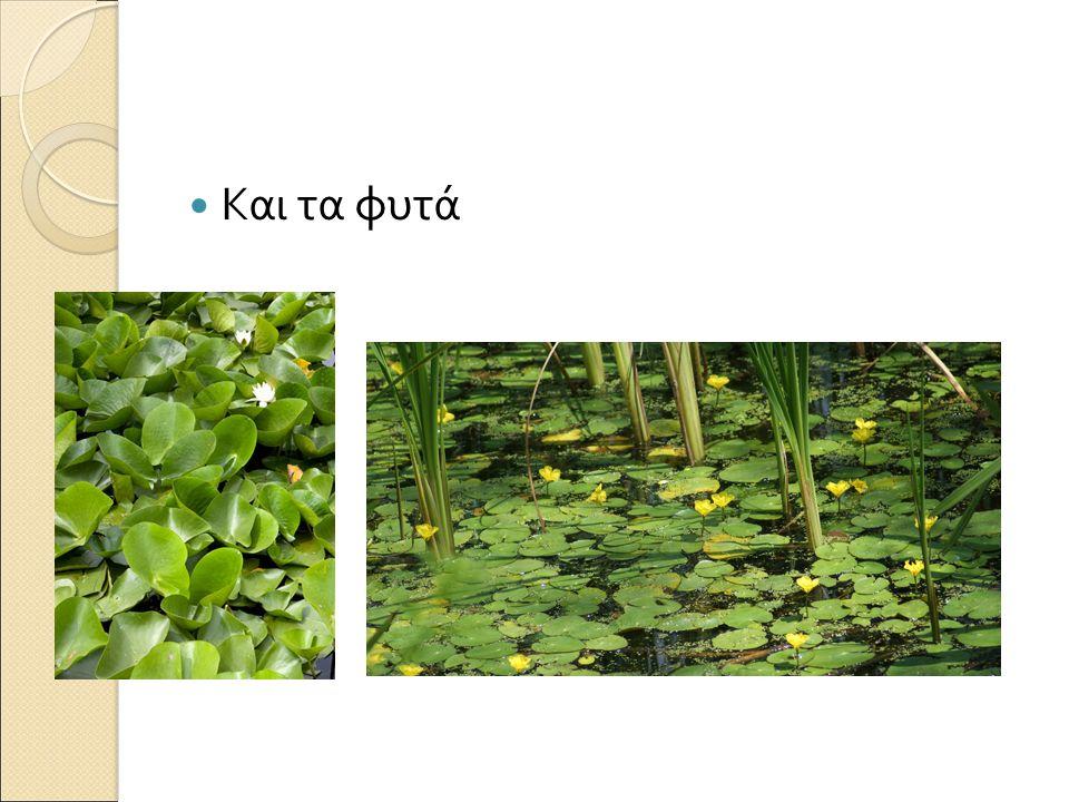 Και τα φυτά