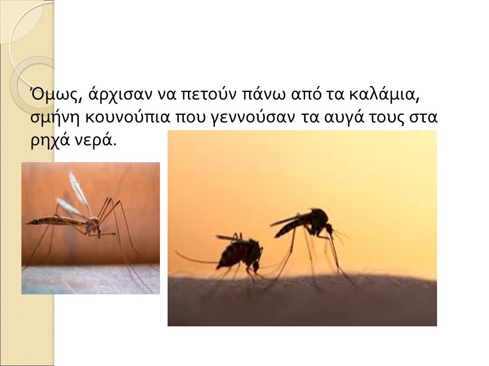 Πλήθος βατράχια έρχονταν και κυνηγούσαν τα κουνούπια με τις μακριές τους γλώσσες για να τα φάνε