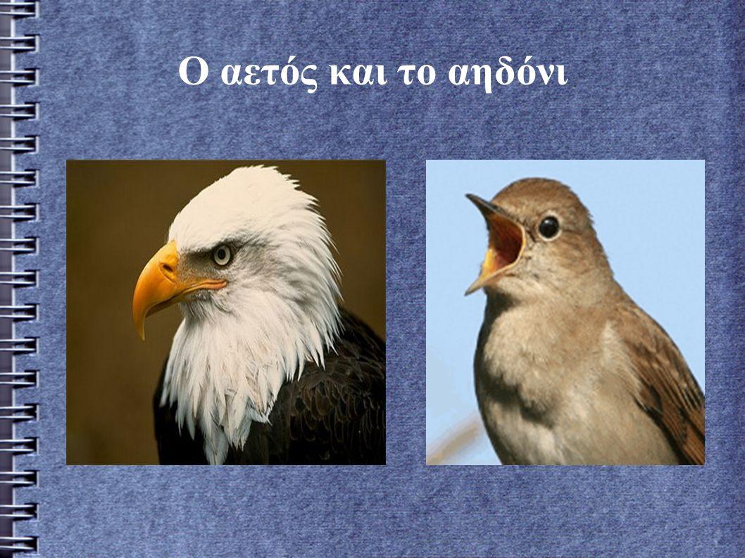 Μια φορά και έναν καιρό ήταν ένας αϊτός που είχε για γείτονα ένα αηδόνι το όποιο κελαιδούσε πιο ωραία και από τα πουλιά του δάσους.Το αηδόνι θαύμαζε τον αετό για τα μεγάλα δυνατά φτερά του,και ο αετός θαύμαζε το αηδόνι για το κελάηδημά του.