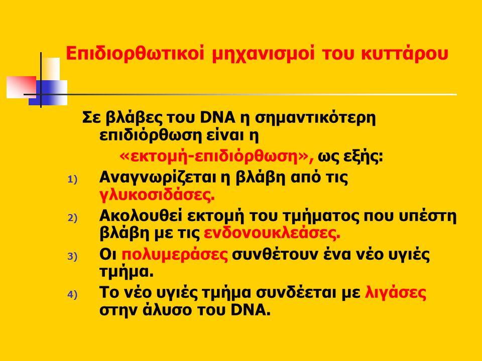 Επιδιορθωτικοί μηχανισμοί του κυττάρου Σε βλάβες του DNA η σημαντικότερη επιδιόρθωση είναι η «εκτομή-επιδιόρθωση», ως εξής: 1) Αναγνωρίζεται η βλάβη από τις γλυκοσιδάσες.