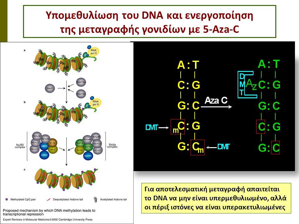 Υπομεθυλίωση του DNA και ενεργοποίηση της μεταγραφής γονιδίων με 5-Aza-C Για αποτελεσματική μεταγραφή απαιτείται το DNA να μην είναι υπερμεθυλιωμένο, αλλά οι πέριξ ιστόνες να είναι υπερακετυλιωμένες