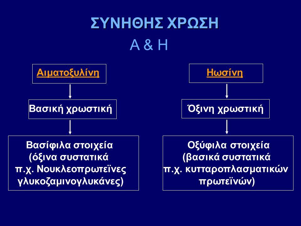 Αιματοξυλίνη Ηωσίνη Βασική χρωστική Όξινη χρωστική Βασίφιλα στοιχεία Οξύφιλα στοιχεία (όξινα συστατικά (βασικά συστατικά π.χ. Νουκλεοπρωτεϊνες π.χ. κυ