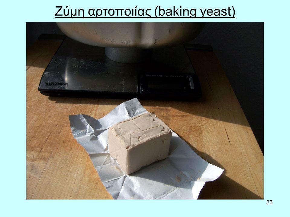23 Ζύμη αρτοποιίας (baking yeast)