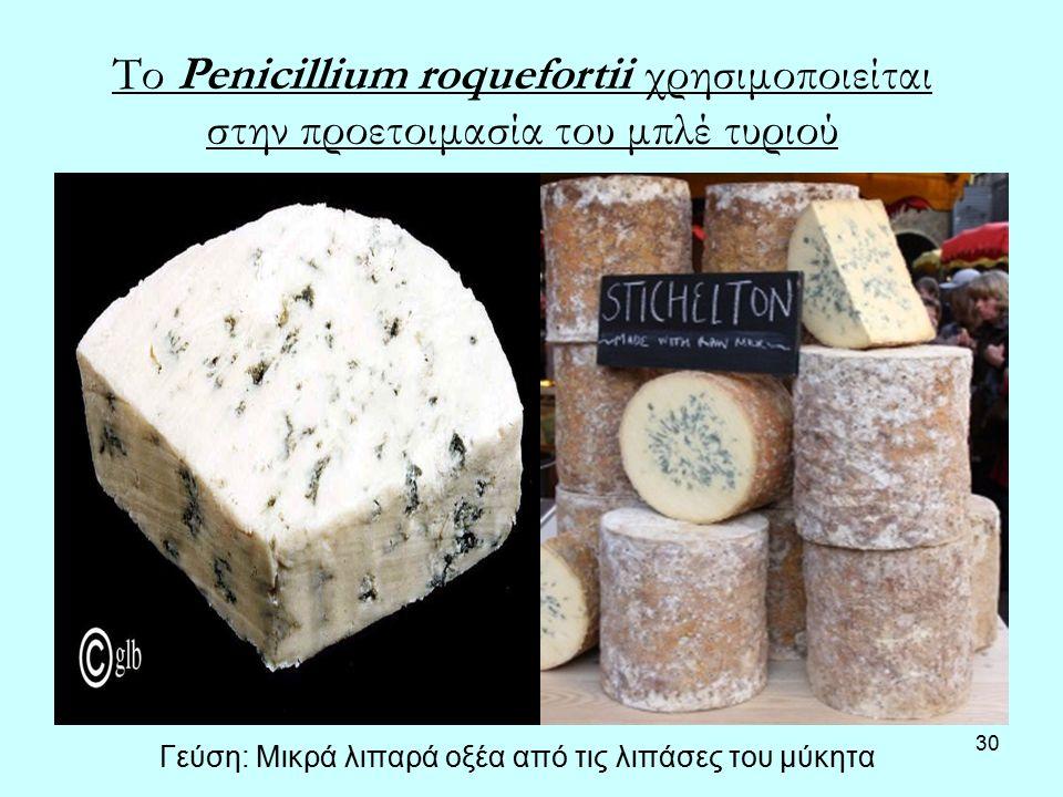 30 Το Penicillium roquefortii χρησιμοποιείται στην προετοιμασία του μπλέ τυριού Γεύση: Μικρά λιπαρά οξέα από τις λιπάσες του μύκητα