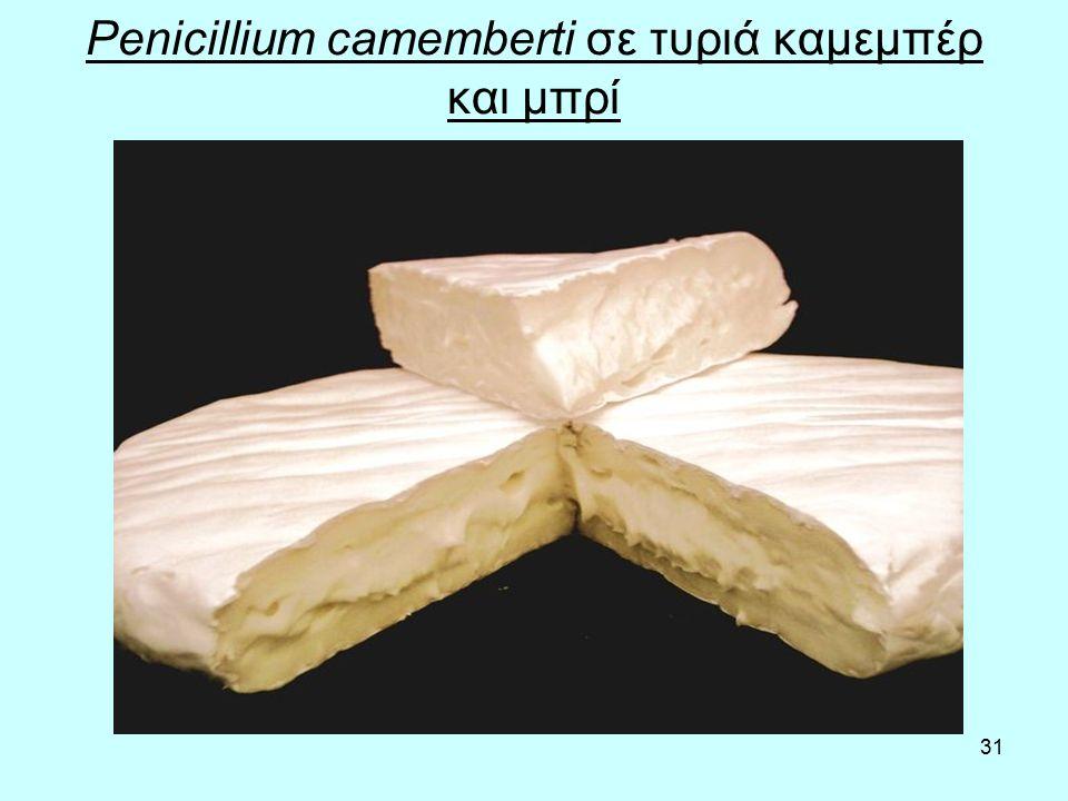 31 Penicillium camemberti σε τυριά καμεμπέρ και μπρί