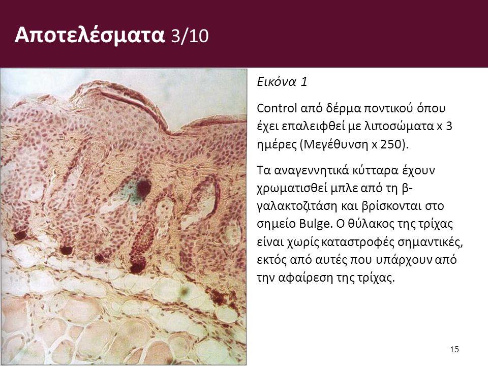 Αποτελέσματα 3/10 Εικόνα 1 Control από δέρμα ποντικού όπου έχει επαλειφθεί με λιποσώματα x 3 ημέρες (Μεγέθυνση x 250).