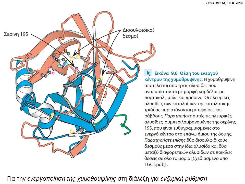Για την ενεργοποίηση της χυμοθρυψίνης στη διάλεξη για ενζυμική ρύθμιση