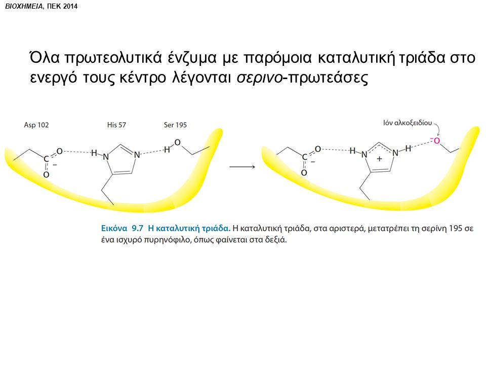 ΒΙΟΧΗΜΕΙΑ, ΠΕΚ 2014 Όλα πρωτεολυτικά ένζυμα με παρόμοια καταλυτική τριάδα στο ενεργό τους κέντρο λέγονται σερινο-πρωτεάσες