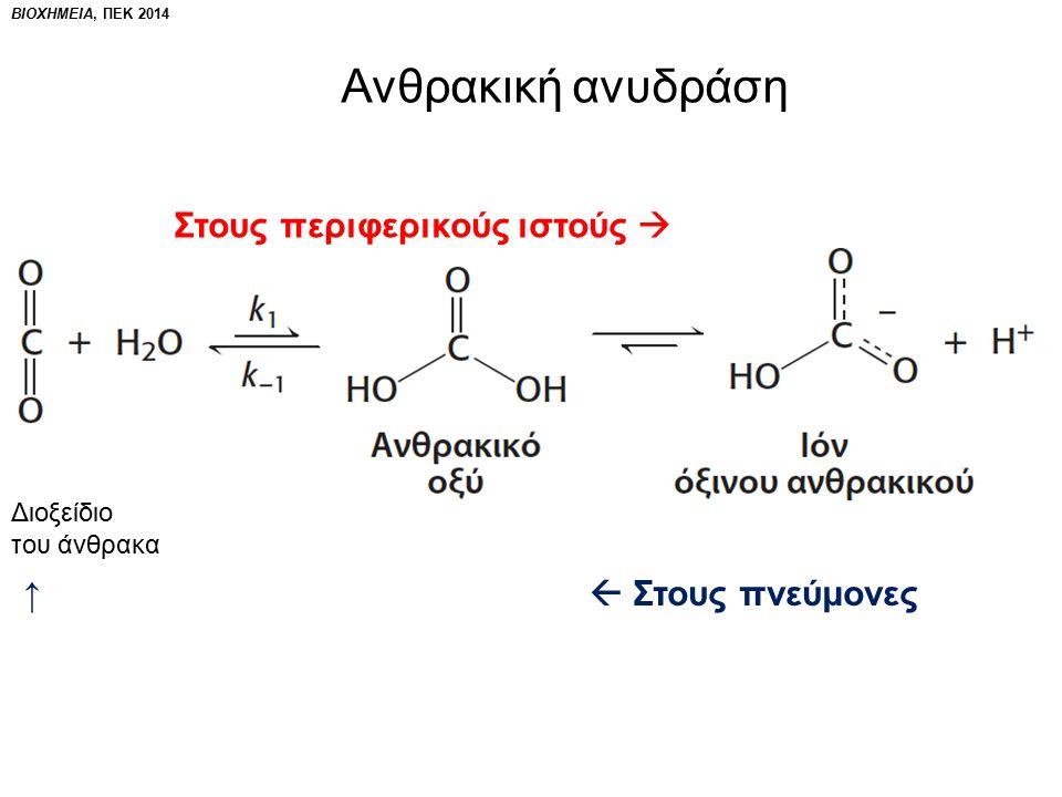 Διοξείδιο του άνθρακα Στους περιφερικούς ιστούς  ↑  Στους πνεύμονες Ανθρακική ανυδράση