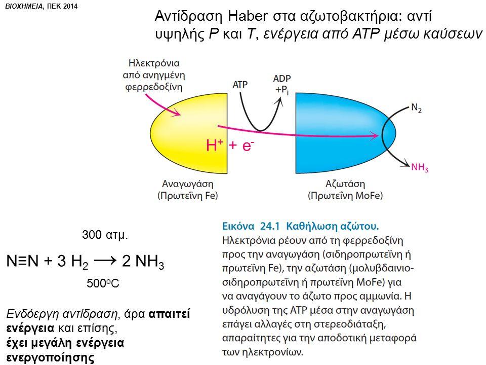 ΒΙΟΧΗΜΕΙΑ, ΠΕΚ 2014 Αντίδραση Haber στα αζωτοβακτήρια: αντί υψηλής Ρ και Τ, ενέργεια από ΑΤΡ μέσω καύσεων 300 ατμ.