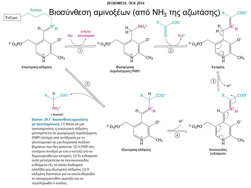Βιοσύνθεση αμινοξέων (από ΝΗ 3 της αζωτάσης)