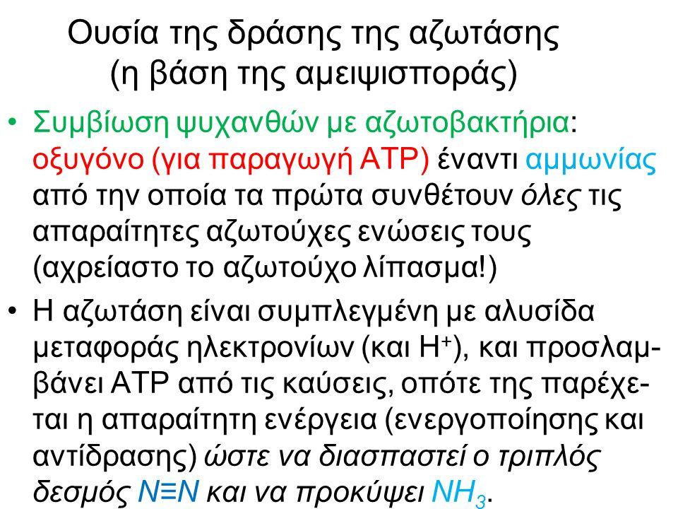 Ουσία της δράσης της αζωτάσης (η βάση της αμειψισποράς) Συμβίωση ψυχανθών με αζωτοβακτήρια: οξυγόνο (για παραγωγή ΑΤΡ) έναντι αμμωνίας από την οποία τα πρώτα συνθέτουν όλες τις απαραίτητες αζωτούχες ενώσεις τους (αχρείαστο το αζωτούχο λίπασμα!) Η αζωτάση είναι συμπλεγμένη με αλυσίδα μεταφοράς ηλεκτρονίων (και Η + ), και προσλαμ- βάνει ΑΤΡ από τις καύσεις, οπότε της παρέχε- ται η απαραίτητη ενέργεια (ενεργοποίησης και αντίδρασης) ώστε να διασπαστεί ο τριπλός δεσμός Ν≡Ν και να προκύψει ΝΗ 3.