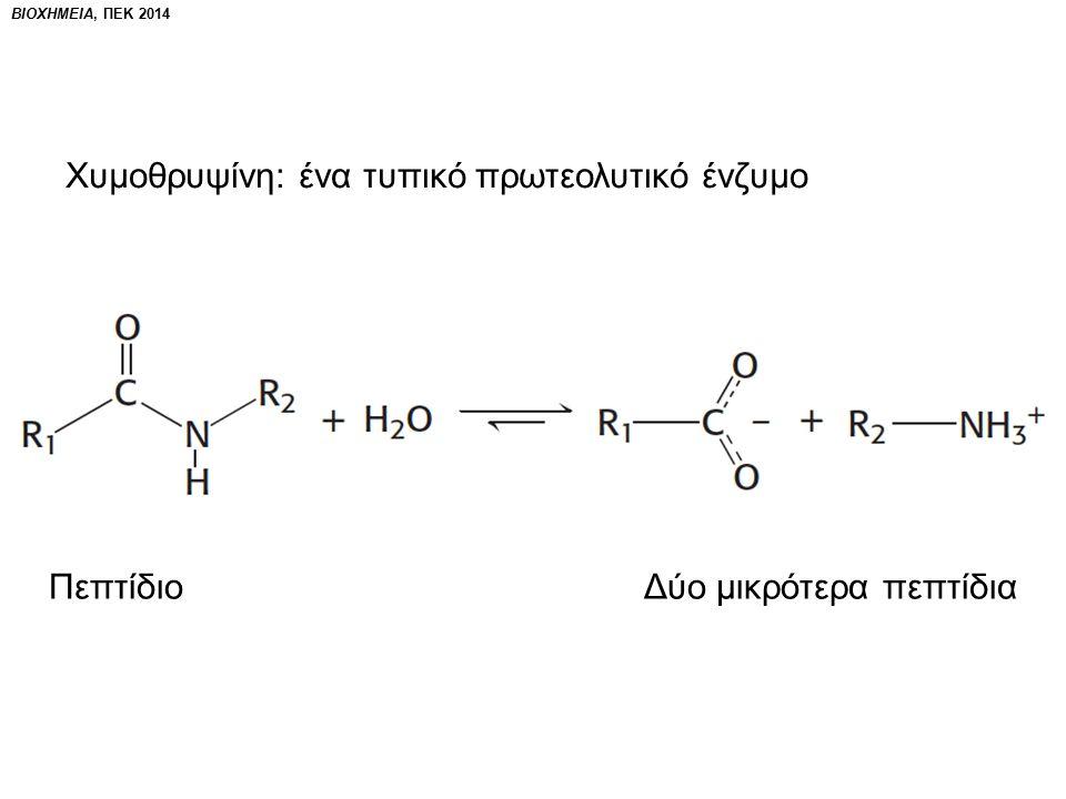ΒΙΟΧΗΜΕΙΑ, ΠΕΚ 2014 Χυμοθρυψίνη: ένα τυπικό πρωτεολυτικό ένζυμο Πεπτίδιο Δύο μικρότερα πεπτίδια