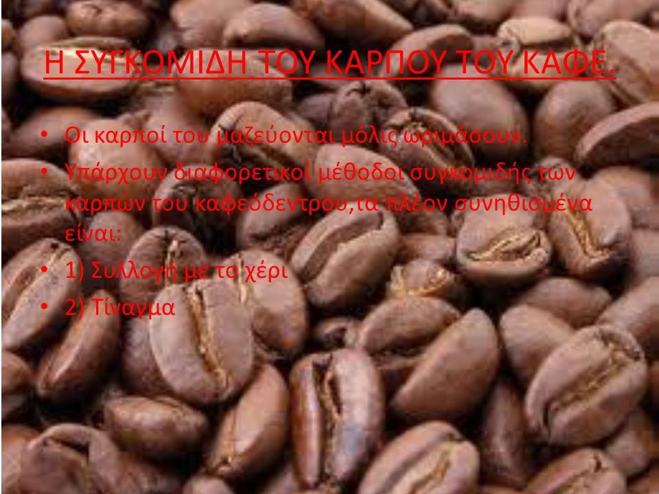 17.Η ποικιλία Arabica έχει 44 χρωμοσώματα και η Robusta 22.