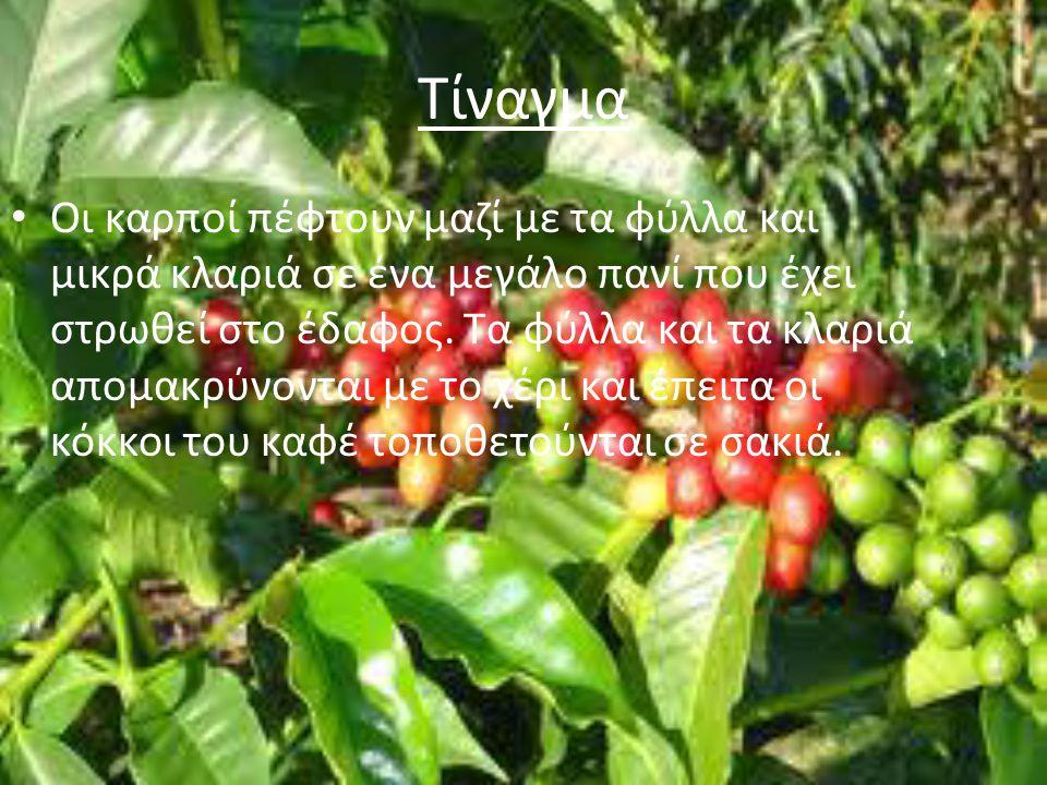 Η ΑΓΟΡΑ ΤΟΥ ΚΑΦΕ Γνωστές εταιρίες καφέ δραστηριοποιούνται ιδιαίτερα στην Ιταλία (illycaffé, Lavazza,Caffé Vergnano), τις Γερμανόφωνες χώρες και τη Γερμανία (Jacobs και Eduscho ) και τις Σκανδιναβικές χώρες