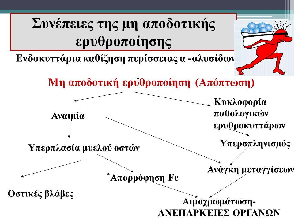 Συνέπειες της μη αποδοτικής ερυθροποίησης Μη αποδοτική ερυθροποίηση (Απόπτωση) Αναιμία Κυκλοφορία παθολογικών ερυθροκυττάρων Υπερπλασία μυελού οστών Ο