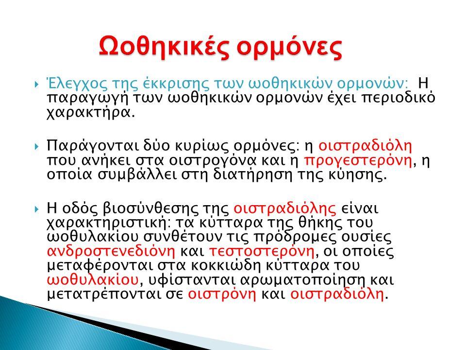  Έλεγχος της έκκρισης των ωοθηκικών ορμονών: Η παραγωγή των ωοθηκικών ορμονών έχει περιοδικό χαρακτήρα.  Παράγονται δύο κυρίως ορμόνες: η οιστραδιόλ