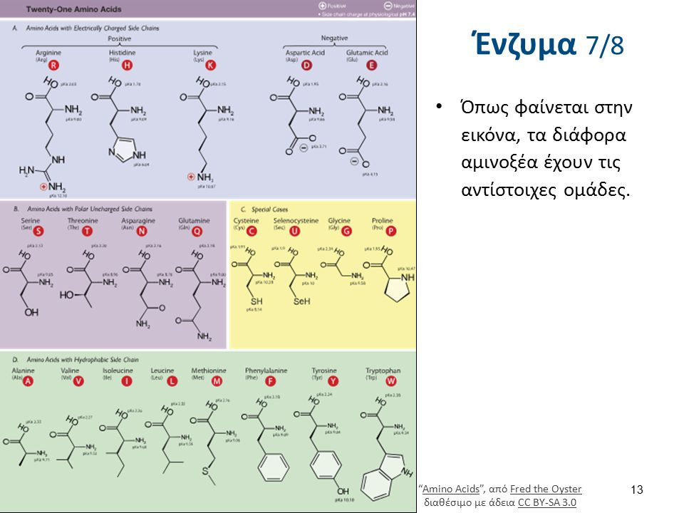 """Ένζυμα 7/8 Όπως φαίνεται στην εικόνα, τα διάφορα αμινοξέα έχουν τις αντίστοιχες ομάδες. 13 """"Amino Acids"""", από Fred the Oyster διαθέσιμο με άδεια CC BY"""