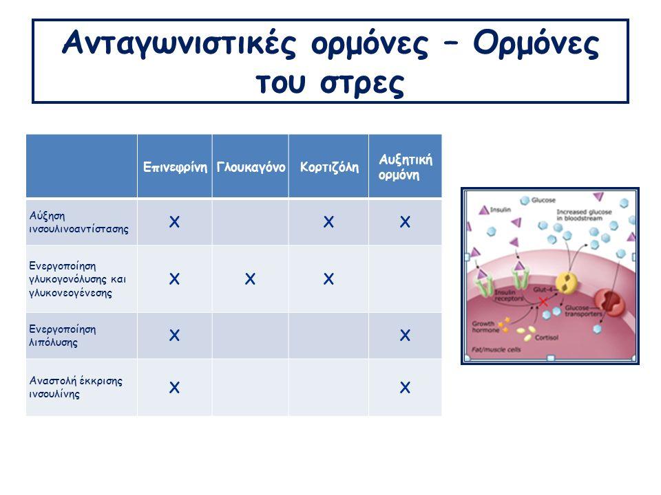 Ανταγωνιστικές ορμόνες – Ορμόνες του στρες ΕπινεφρίνηΓλουκαγόνοΚορτιζόλη Αυξητική ορμόνη Αύξηση ινσουλινοαντίστασης ΧΧΧ Ενεργοποίηση γλυκογονόλυσης και γλυκονεογένεσης ΧΧΧ Ενεργοποίηση λιπόλυσης ΧΧ Αναστολή έκκρισης ινσουλίνης ΧΧ