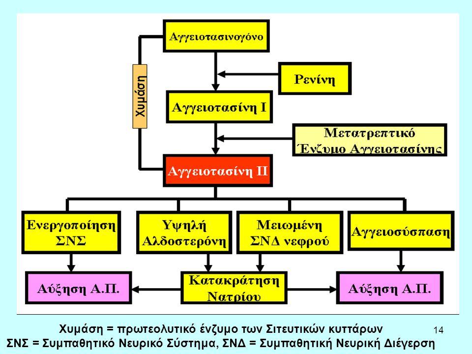 14 Χυμάση = πρωτεολυτικό ένζυμο των Σιτευτικών κυττάρων ΣΝΣ = Συμπαθητικό Νευρικό Σύστημα, ΣΝΔ = Συμπαθητική Νευρική Διέγερση