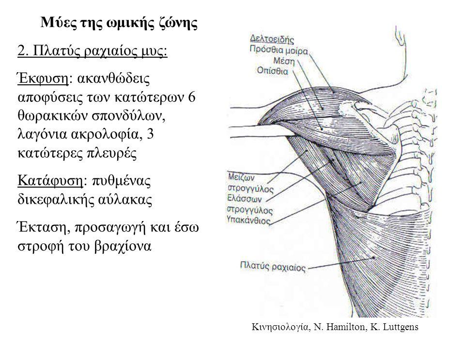 Μύες της ωμικής ζώνης 2.