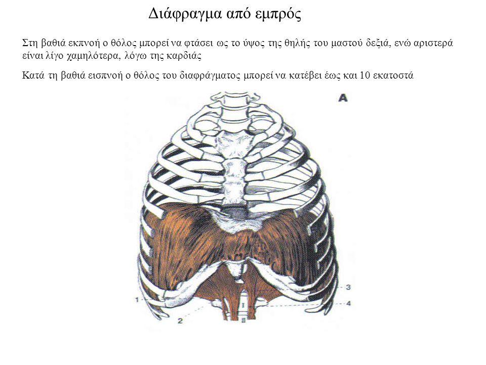 Διάφραγμα από εμπρός Στη βαθιά εκπνοή ο θόλος μπορεί να φτάσει ως το ύψος της θηλής του μαστού δεξιά, ενώ αριστερά είναι λίγο χαμηλότερα, λόγω της καρδιάς Κατά τη βαθιά εισπνοή ο θόλος του διαφράγματος μπορεί να κατέβει έως και 10 εκατοστά