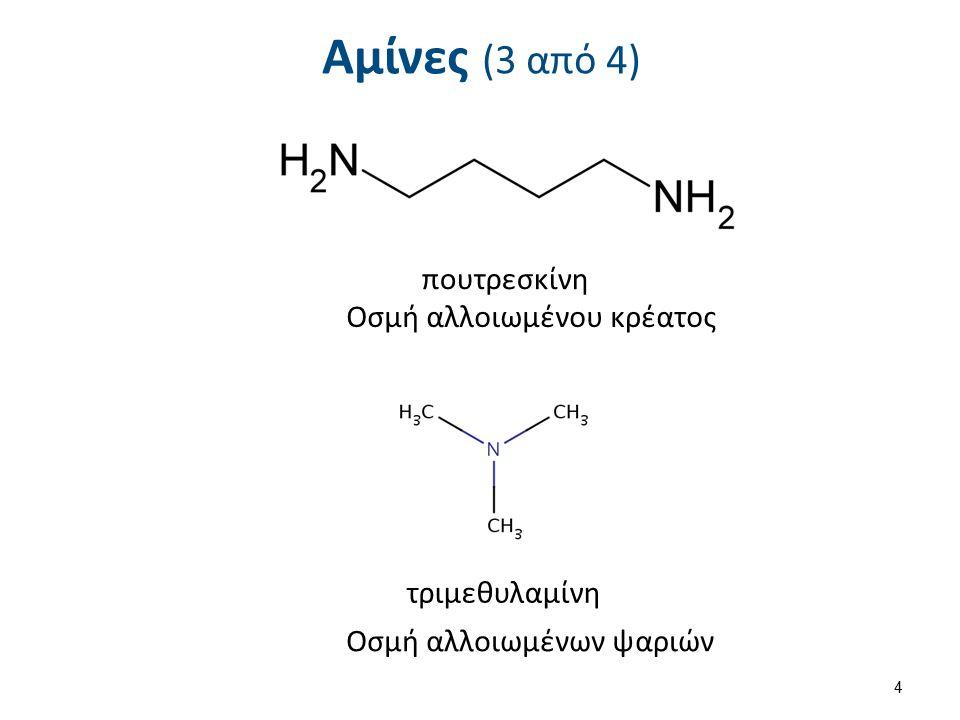 Αμίνες (3 από 4) πουτρεσκίνη τριμεθυλαμίνη Οσμή αλλοιωμένου κρέατος Οσμή αλλοιωμένων ψαριών 4