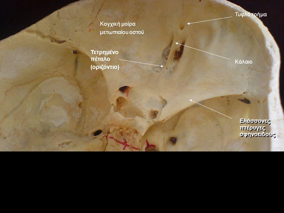 Τυφλό τρήμα Κάλαιο Κογχική μοίρα μετωπιαίου οστού Ελάσσονες πτέρυγες σφηνοειδούς Τετρημένο πέταλο (οριζόντιο)