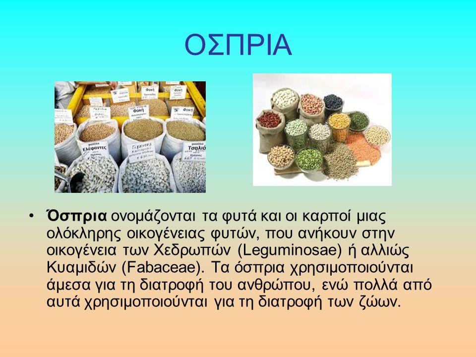 ΟΣΠΡΙΑ Όσπρια ονομάζονται τα φυτά και οι καρποί μιας ολόκληρης οικογένειας φυτών, που ανήκουν στην οικογένεια των Χεδρωπών (Leguminosae) ή αλλιώς Κυαμιδών (Fabaceae).