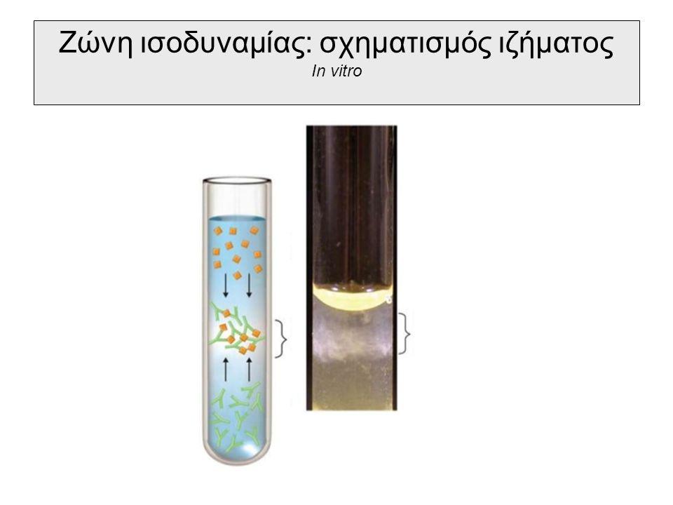 Ζώνη ισοδυναμίας: σχηματισμός ιζήματος In vitro