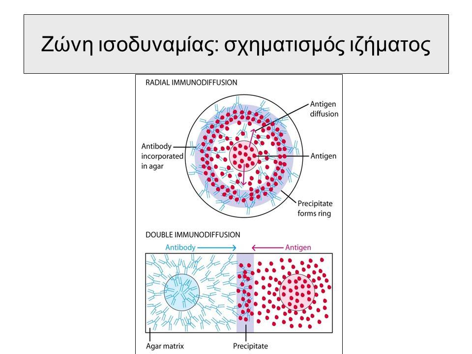 Ανοσοδιάχυση, πλεονεκτήματα Μπορεί να ανιχνευθεί ένα πολυδύναμο σύστημα αντιγόνων- αντισωμάτων πολύ εύκολα.